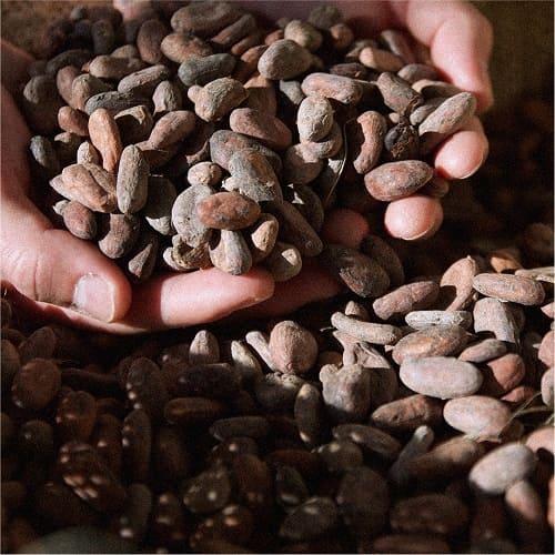 Essenzo cacao